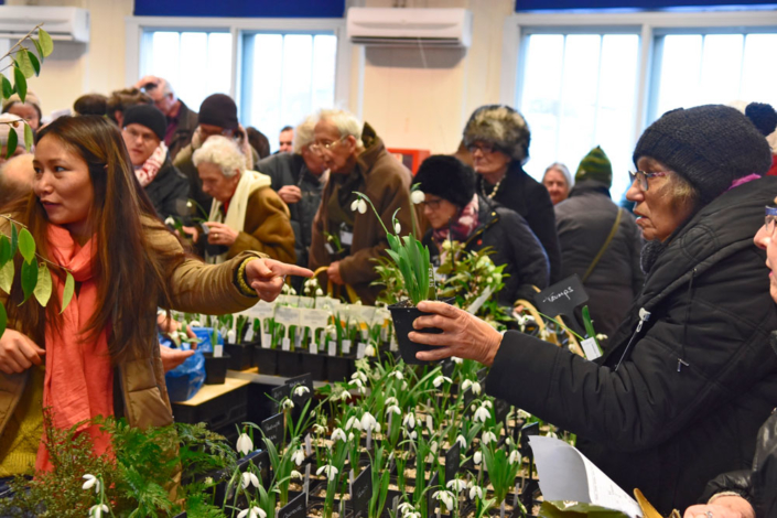 Best in The West Snowdrop Sale - Shaftesbury Snowdrops