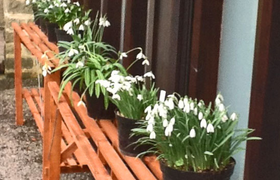 The Heritage Collection 2013 - Shaftesbury Snowdrops