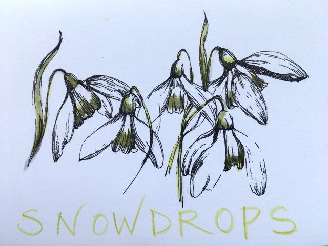 Shaftesbury Snowdrops Exibition 2021 - Eva Goddard