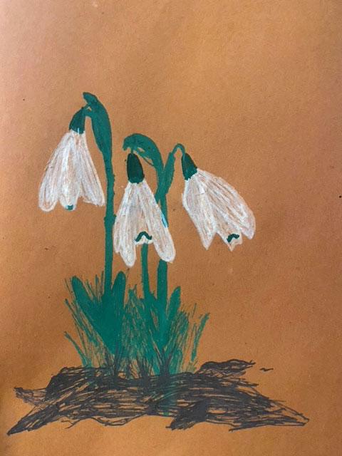 Shaftesbury Snowdrops Exibition 2021 - Harriet Brinsford