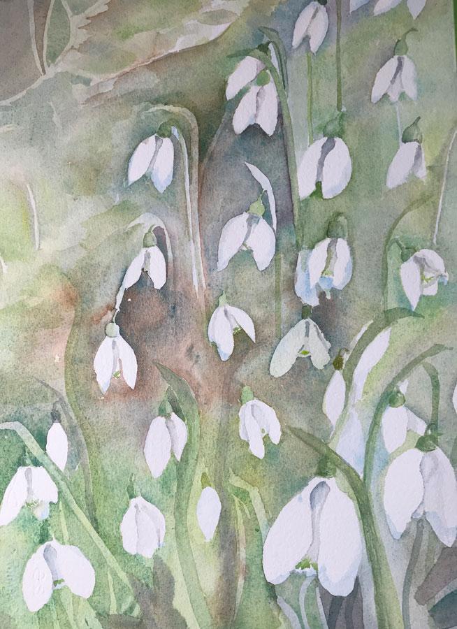 Shaftesbury Snowdrops Exibition 2021 - Sue Bates 2