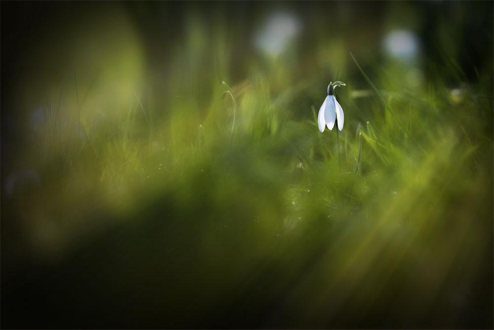 Shaftesbury Snowdrops Exibition 2021 - Fo Bugler - Solitude Standing